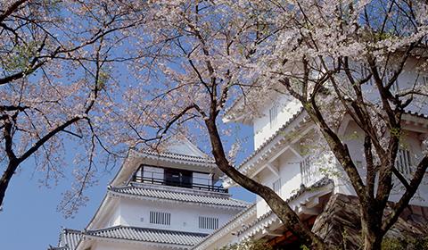 悠久山桜まつり。約2500本もの桜を楽しめます。