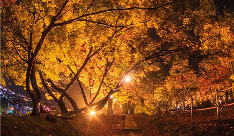 もみじ園。夜間のライトアップは幻想的です。